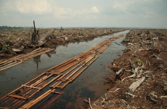 Skogsskövling i torvrik mark i den indonesiska provinsen Riau år 2006 för anläggande av palmoljeplantage